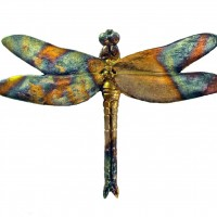 Dragonfly by Alison Payne and Antony Halls