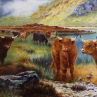 Highland Cattle by Chris Burns