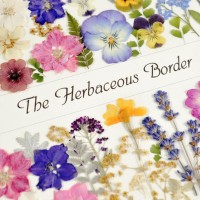 Herbaceous Border by Diane Blandford