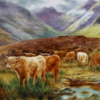 Highland Cattle by Harcourt China