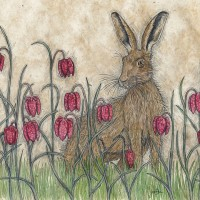 Hare in Fritillaries by Jennifer Chance