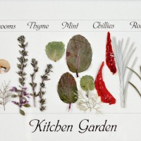 Kitchen Garden by Diane Blandford