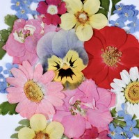 Mixed pressed flowers by Diane Blandford