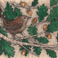 Wren in Oak leaves by Jennifer Carr