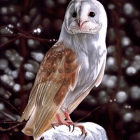 Barn Owl in Winter by Karie-Ann Cooper