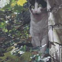 New Prowl by Karie-Ann Cooper