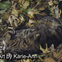 Tabby Cat by Karie-Ann Cooper