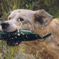 Water by Karie-Ann Cooper