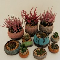 Planters by Claire Billingsley