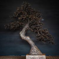 Omiya-Pine by David Powell